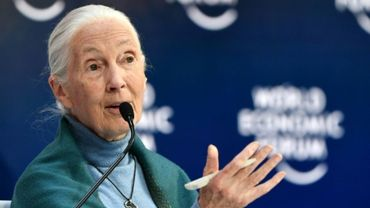 "Coronavirus : les humains doivent cesser de ""mépriser"" la nature, avertit Jane Goodall."