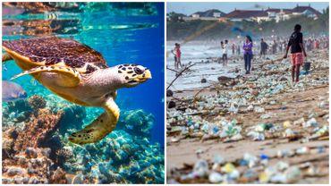 La biodiversité planétaire s'effondre: pourquoi sommes-nous tous concernés? Qui est responsable?