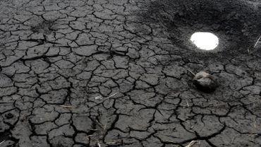 C'est la première fois que des scientifiques mettent le doigt sur des phénomènes climatiques extrêmes qui n'auraient pas pu se produire sans le changement climatique.