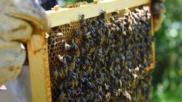 Autriche: un arboriculteur est condamné à de la prison ferme après la mort d'abeilles
