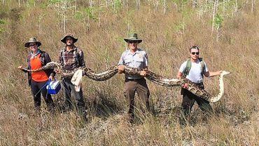 Un python de plus de 5 mètres capturé en Floride