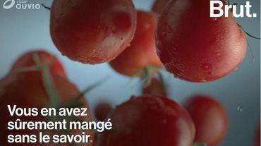 Ce qui se cache derrière la plupart des concentrés de tomates que vous mangez
