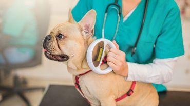 Lecture des données d'une puce sur un chien