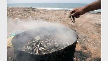 Des moules, pêchées en bord de mer, sont cuites sur une plage près de Rabat, le 18 août 2012