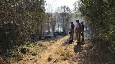 Aywaille: un feu de colline provoqué accidentellement en zone natura 2000