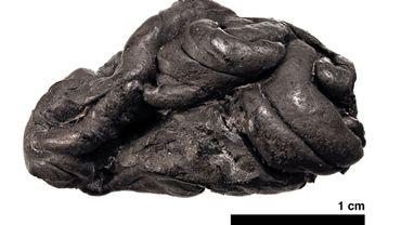 """Un """"chewing-gum"""", vieux de 5700 ans, porte des traces d'ADN humain"""