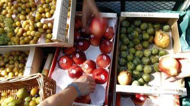 Les fruits seront sucrés et abondants.