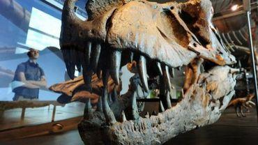 Un squelette de tyrannosaure rex exposé à Los Angeles, le 7 juillet 2011