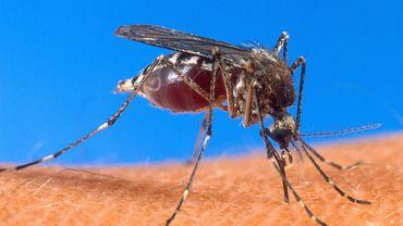 Pourquoi les moustiques piquent-ils surtout la nuit?