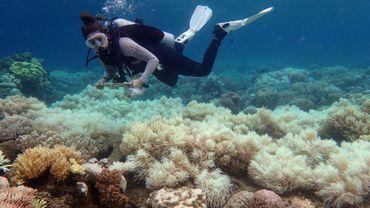 Une plongeuse examine des coraux blanchis sur l'Ile d'Orphée sur une photo prise par Greg Torda et fournie le 10 avril 2017 par le Centre d'excellence pour les études sur les récifs coralliens de l'Australian Research Council (ARC)