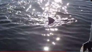 Il a l'aspect du requin, se déplace comme un requin, mais c'est un sous-marin télécommandé.