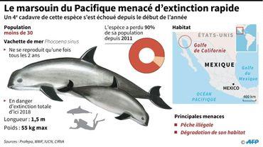 Mexique : le plus petit marsouin menacé d'extinction rapide