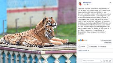 Deux tigresses malades euthanasiées au parc Bellewaerde