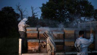 Enfumage des ruches pour le transport, le 25 juin 2020 à Volx.