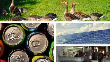 Foie gras, panneaux solaires… le gouvernement flamand prend des mesures, quid de la Wallonie et Bruxelles?