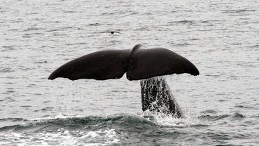 """Ecoutez les orques en direct sur """"Orca Live"""""""