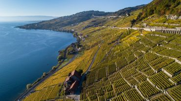 A Lavaux, les vignes installées en terrasses se jettent dans le lac Léman, et c'est délicieusement beau.