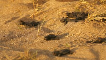 """Depuis le début des années 2000, Mona Kahlil s'occupe de la """"plage des tortues Al-Mansouri"""", dans le but de protéger les tortues de mer dans le sud du Liban."""