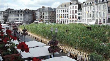 Les tournesols sur la grand-place de Mons