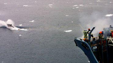 Plus de 300 baleines tués par des chasseurs japonais en Antarctique