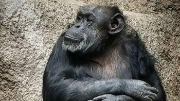 Cécilia déprimait dans un zoo argentin