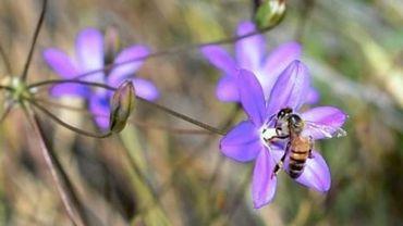 Les abeilles mises à l'honneur du 28 mai au 4 juin