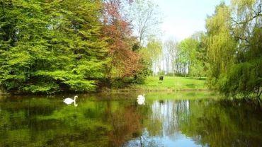 Jumet : un étang du parc De La Serna vidé de son eau par vandalisme