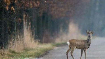 Le passage accru dérange la faune et la flore en  forêt de Soignes.