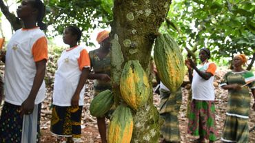 Des femmes d'un coopérative agricole produisant du cacao à Adzope, en Côte d'Ivoire, le 17 avril 2019