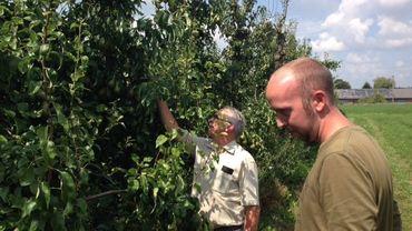 Jean-Charles et Guillaume Mahieu, cultivateurs à Barry, s'attendent à une récolte de poires abondante