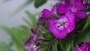 Des traces d'insecticides dans les plantes qui ornent nos jardins