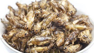 Les insectes dégoûtent encore trop les consommateurs pour remplacer la viande