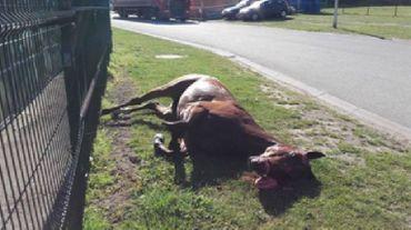 Le cheval mort toujours au bord de la piste deux jours après les faits, une vision qui a choqué Lydia Dumont qui a fait part de sa colère sur Facebook