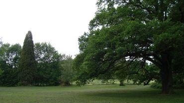 Les parcs et cimetières de la ville avaient été fermés mercredi par précaution en raison des fortes rafales de vent.
