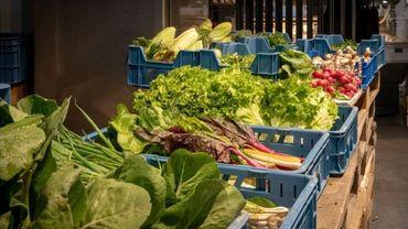 Aider les Namurois à produire eux-mêmes, chez eux, une alimentation durable et de qualité