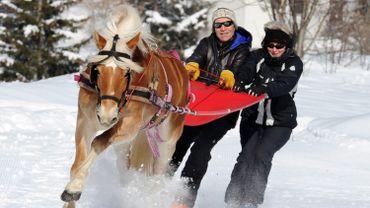 Le ski-joëring, une activité unique en Belgique qui se pratique avec des skis alpins ou confortablement installé dans une bouée, le skieur étant tiré par un cheval de trait ardennais.