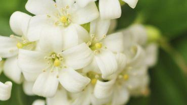 Plante d 39 int rieur du mois les fleurs blanches for Plante 6 mois