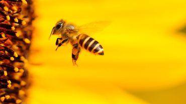 """Isabelle Saporta: """"Chère abeille, sans toi on va perdre chaque année 153 milliards d'euros."""