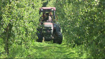 Excellentes poires dans les vergers cette année, encore faut-il réussir à les écouler