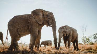 Les experts de la CITES au chevet des espèces menacées à partir de samedi