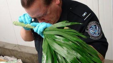 Un douanier contrôle un bouquet de fleurs à l'aéroport de Miami aux Etats-Unis, le 11 février 2016