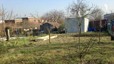 En l'absence d'occupation du terrain le jardin potager de la rue Navez  risque bien de devenir une jungle, par le manque de présence citoyenne, et d'entretien.