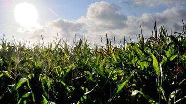 """B. Parmentier: """"Il faut renouveler les techniques de production agricole"""""""