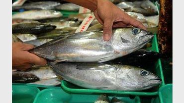 Manger du poisson est bon pour le coeur des jeunes femmes for Manger pour poisson
