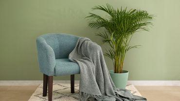 Plante d'intérieur du mois: l'areca