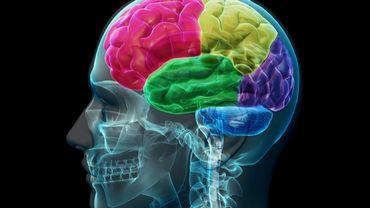 Des dysfonctionnements neuronaux dans ses lobes temporaux seraient à l'origine de ce déjà-vu permanent.