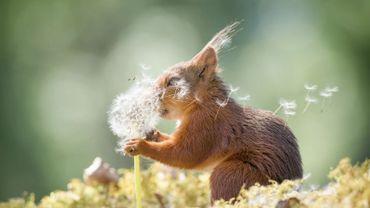 """Découvrez les finalistes du """"Comedy Wildlife Photo Awards"""" qui récompensent les photos d'animaux les plus amusantes"""