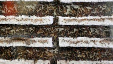 """Des colonies de fourmis proposées à la vente dans le magasin """"Just Ants"""", le 23 septembre 2020 à Singapour"""