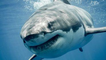 Le grand requin blanc serait fan de rock... et Airbnb a décidé de lui faire plaisir avec un concert de Kiss.