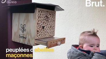 Et si vous adoptiez vos propres abeilles sauvages?